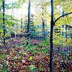 余った木材や端材から自作で木ダボを作る方法。ネジ穴隠しや接着に使える!